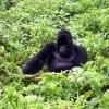 Ruanda: Musta Aafrika südames