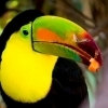 Costa Rica: Looduse paradiis